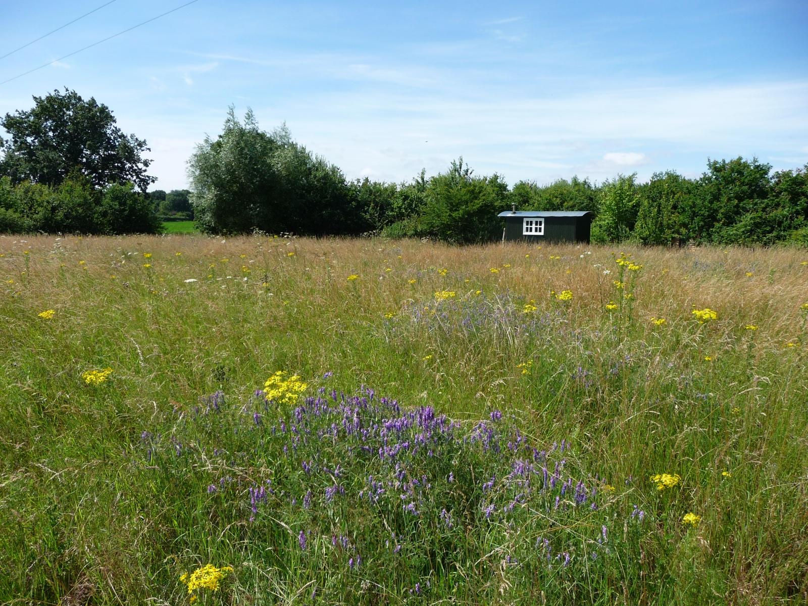 view of shepherds hut